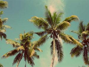 jerry-rubin-retirement-legacy-planning-palm-trees